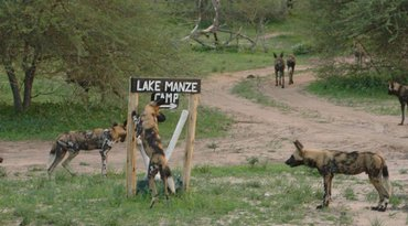 3days Selous Game Reserve