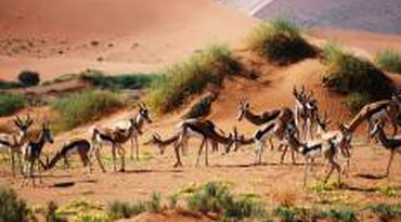 3 Days Sossusvlei Safari (Lodging) Namibia