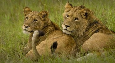 Queen Elizabeth National Park 4 days Tour