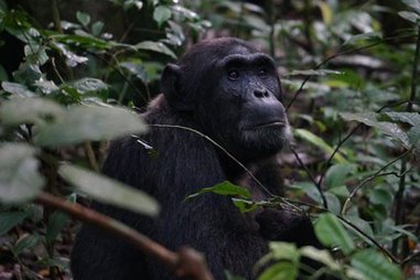 5-day gorillas and white water rafting