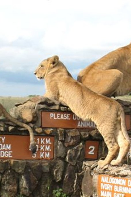 Nairobi National Park Day Tours