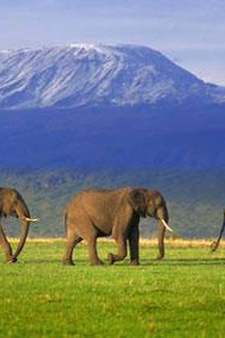 9 DAYS  8 NIGHTS   KENYA SAFARIS