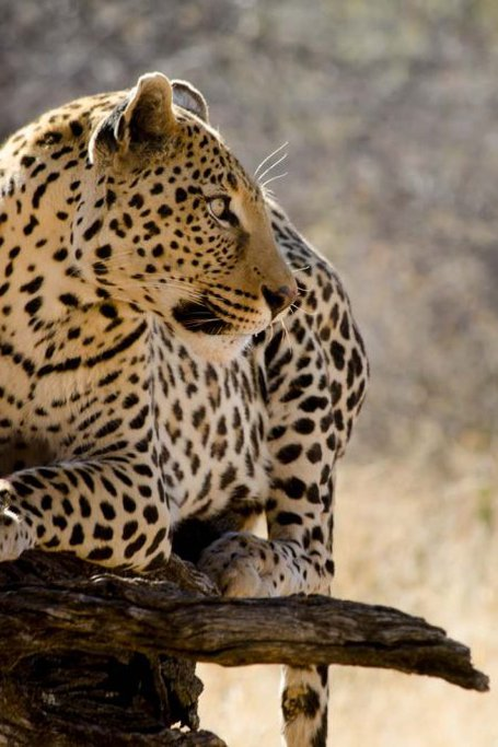 8 Days Taste Of Namibia Safaris