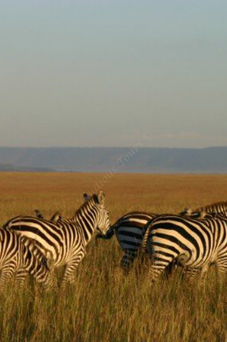 4 Days Tsavo Amboseli Lodge Safari Holidays