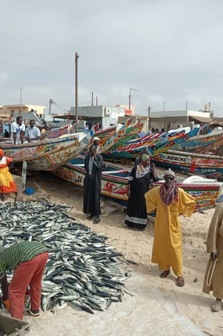 The Best Of Senegal,8 Days