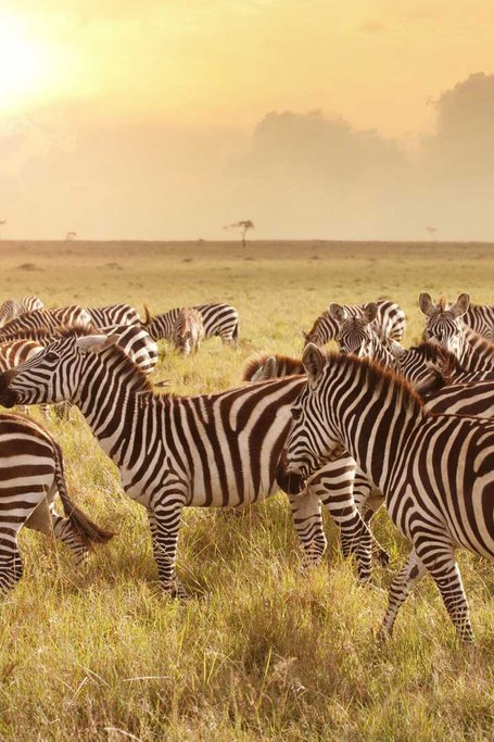 4 Days Wildlife Safari Tarangire, Ngorongoro And Serengeti