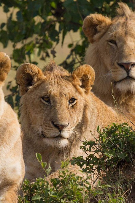 4 DAYS  3NIGHTS  SAFARI KENYA