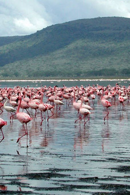 Lake Nakuru National Park Day Trip