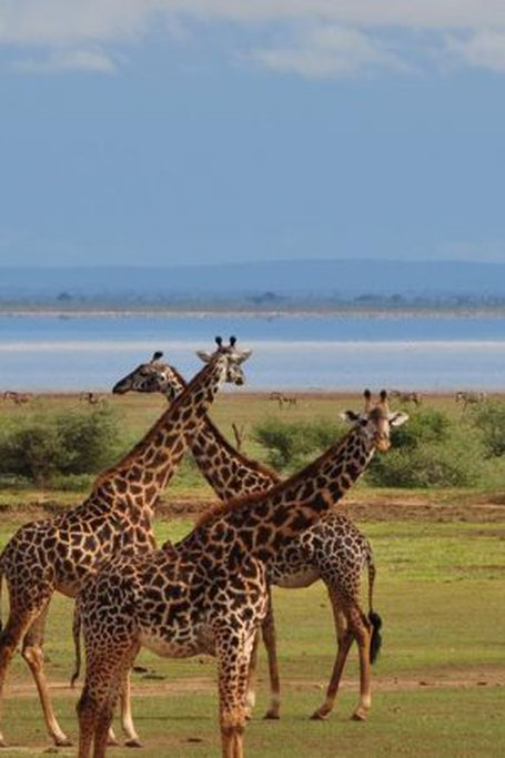 Lake Manyara Guided Day Tour From Arusha