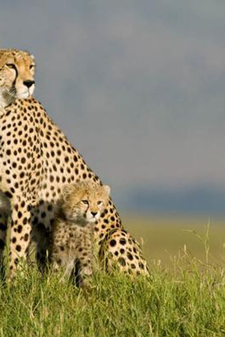3 Day Flying Package To Amboseli National Park