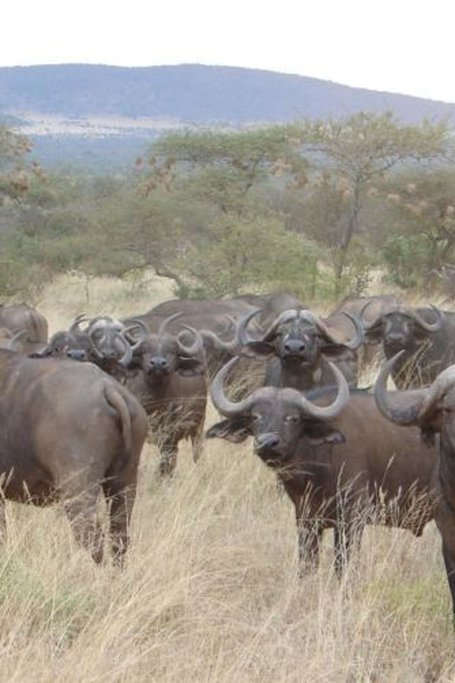 3 Days Tsavo West Tsavo East National Park Safari Holiday
