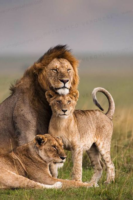 3 Days Masai Mara Budget Safari