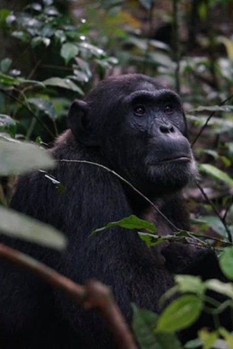 3-Day Gorilla Trekking Safari In Uganda - Budget Safari