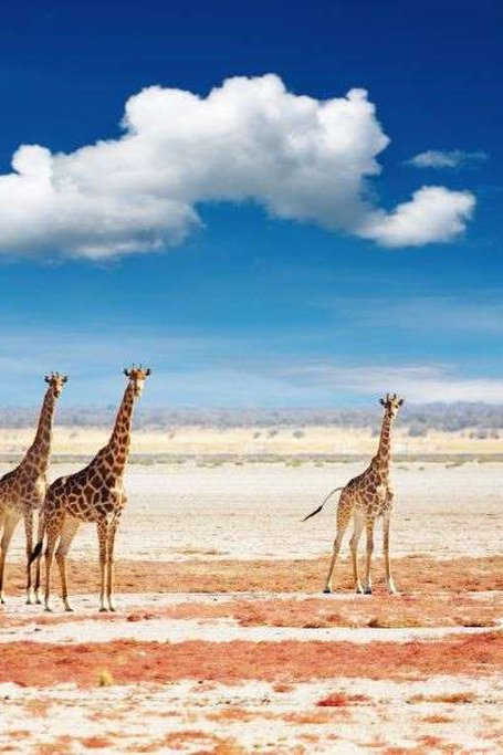 6 Days Namibia Express Safari