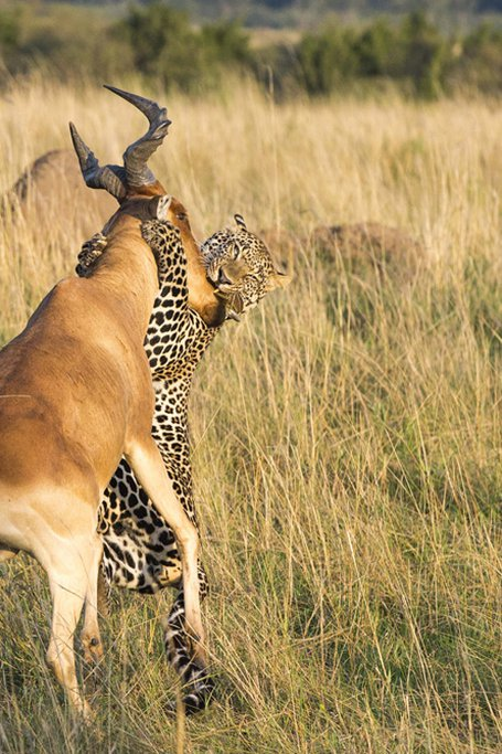5 Days Lake Nakuru And Mara Safari