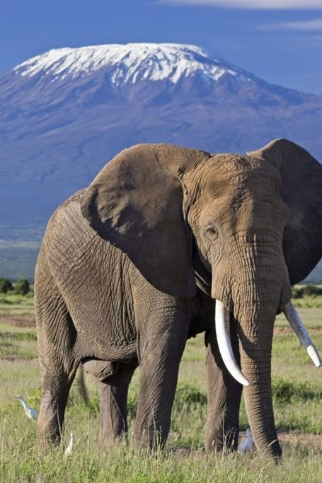 3 DAYS AMBOSELI DAILY DEPARTURES