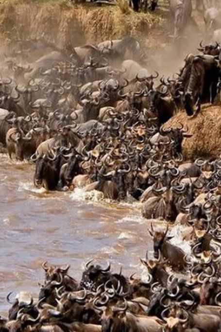 3 Days Masai Mara Safaris In Kenya - 2019 Tour