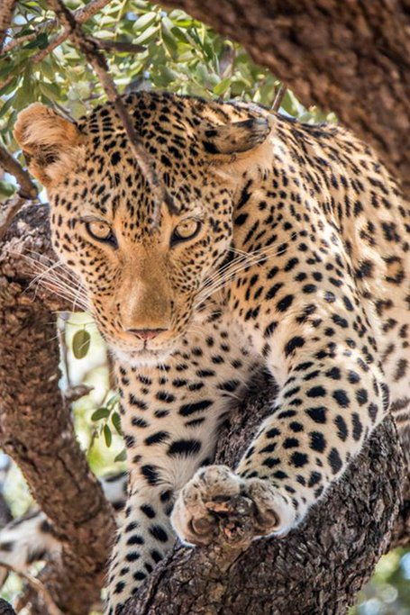 A Thrilling Safari Experience With An Eco-friendly Kruger National Park