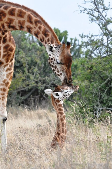7 Days 6 Nights Samburu, Lake Nakuru, Lake Naivasha & Masai Mara