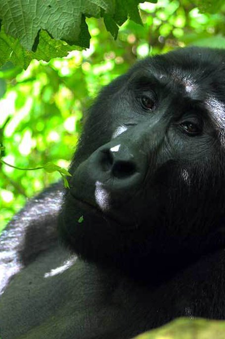 3 Days Gorilla Safari In Bwindi