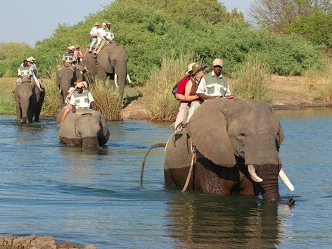 Experience An Elephant Ride Safari - Mukuni Big 5