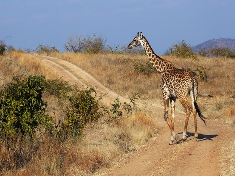 4 Day Safari To Ruaha National Park