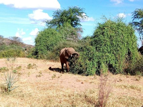 3 DAYS TSAVO WEST AND EAST NATIONAL PARK