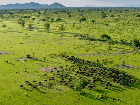 4 Day Safari To Selous Game Reserve