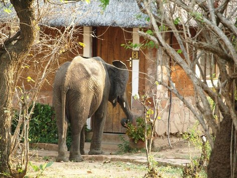 4 Day South Luangwa National Park Budget Safari