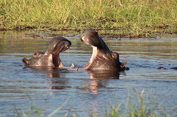 13 days spectacular safari in north west district botswana oW1kK.jpg
