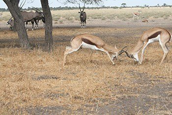 14-days-extraordinary-safari-in-botswana-dtEpC.jpg