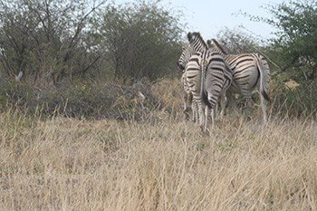 8 days overlanding safari tour in botswana oG02M.jpg