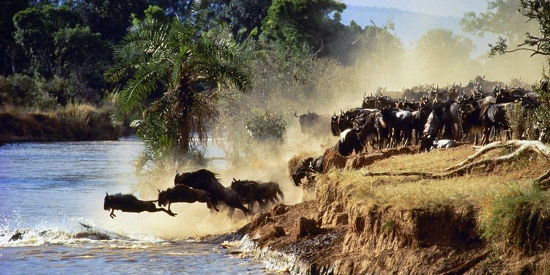8 days tanzania serengeti wildebeest migration safari adventure y1ZNFiXH0I.jpeg