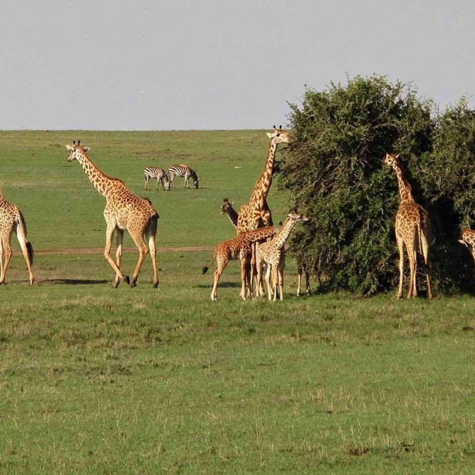 classic kenya highlights safari zrYqj.jpg