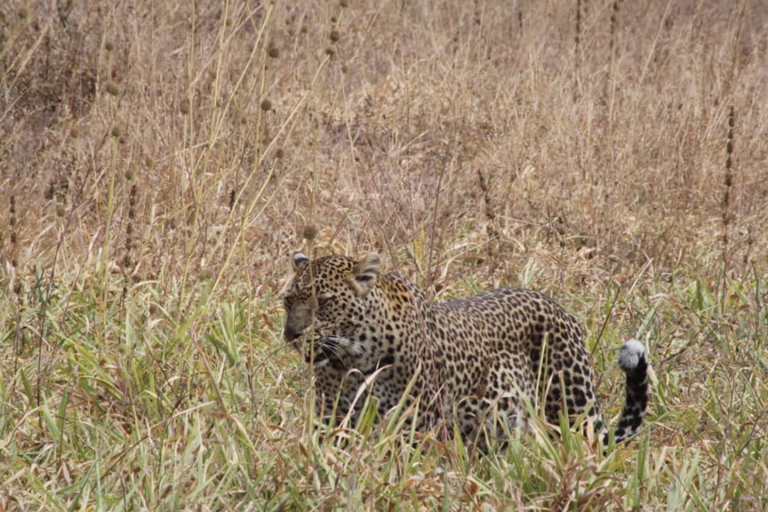 day trip to tarangire national park Fw3Ww.jpg