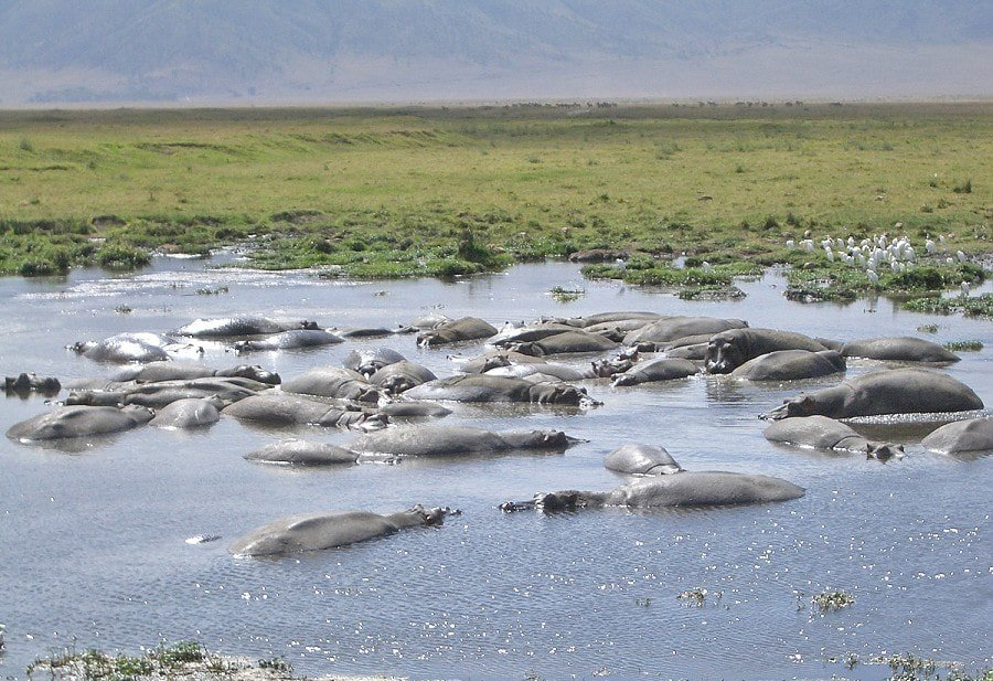 ngorongoro-crater-full-day-trip-LroXy.jpg